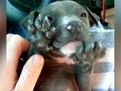 Police officers give freezing puppy second chance at life