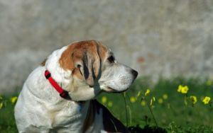 Why CBD Oil Is Becoming So Popular For Dogs With Joint Pain