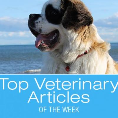 Top Veterinary Articles of the Week: Chimeras, Prostate Cancer, and more