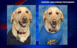 Student's Service Dog Honored With Yearbook Photo & Plaque