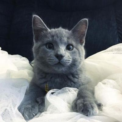 Rescuers Surprised To Find Kitten With 'Bear' Paws