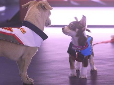 Blizzard is streaming a Puppy Rumble today for Overwatch