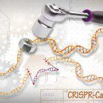 Is CRISPR Gene Editing Doomed, Even As Gene Therapy Enters the Clinic?