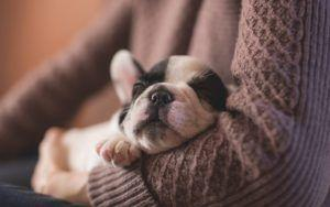 The Science Behind Cute Aggression: Why We Want To Squeeze Adorable Creatures