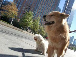 Runaway Dog Spends The Day Touring NYC Before Being Reunited With Owner