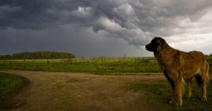 Why CBD Oil Might Be Your Dog's Best Friend During a Thunderstorm