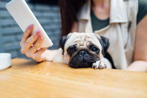 What To Do If Your Pup Goes Missing