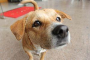 What Are The Best Ways To Give Your Dog Bone Broth Powder?