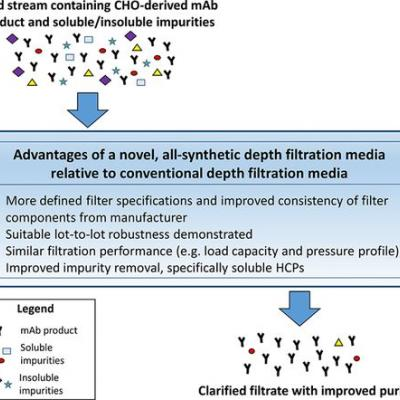 Improved HCP Reduction Using a New, All‐Synthetic Depth Filtration Media Within an Antibody Purification Process