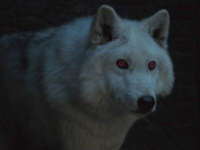 Will Ghost Be In 'Game Of Thrones' Season 8? Fans Are Starting To Worry