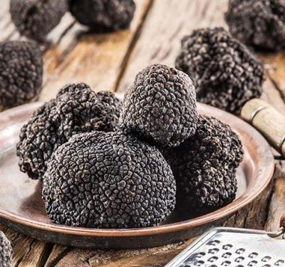 Sheryn Clothier experiments with growing truffles on her Waikato home