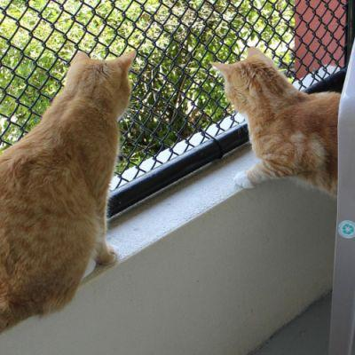 Jimi and Hendrix keeping track of the lizards. catdepot