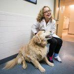 An experimental cancer treatment cured this dog. Could it work for people?