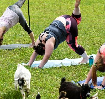 How Goat Yoga Became A Massive Wellness Trend