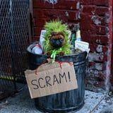 Um, David Harbour's Oscar the Grouch SNL Spoof Has Nothing on This Adorable Pup's Costume