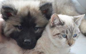How To Ensure Your Pets Are Cared For, Should You Pass Away