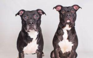 """These """"Brothers From Another Mother"""" Have Been Waiting Over A Year For Their Forever Homes"""