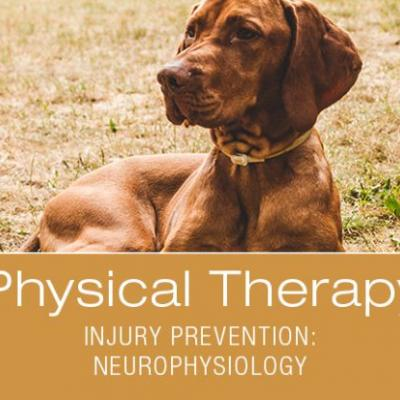Canine Athlete Injury Prevention beyond Traditional Means: Using Neurophysiology