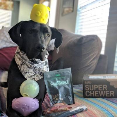 What Comes In a Super Chewer BarkBox?