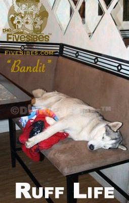 It's A Ruff Life on a FiveSibes Flashback Friday!