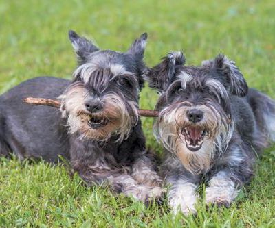Kidney Stones in Dogs: Symptoms, Causes, Diagnosis and Treatments