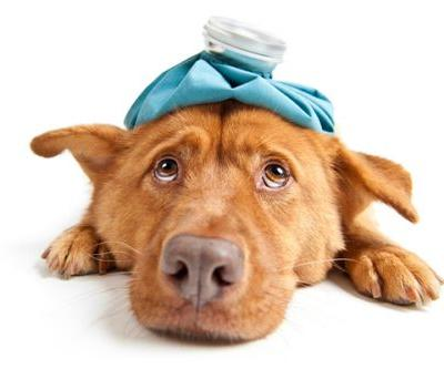 Kennel Cough Treatment - 4 At-Home Remedies for Kennel Cough