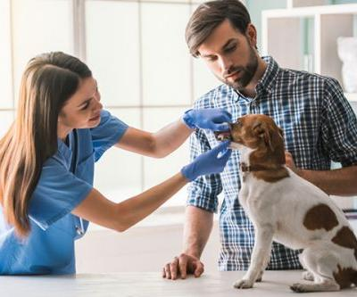 The Real Costs of Treating Dog Diseases and Injuries
