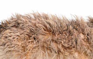 """Photographer's """"Hair of the Dog"""" Photos Show How Beautiful Dog Fur Can Be"""