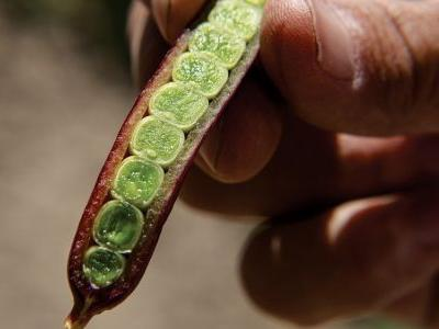 The Inventor of the Snap Pea Has a Farm You Wouldn't Believe