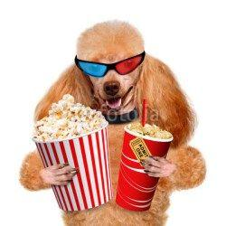 Dog Friendly Outdoor Movies in Seattle - Summer 2018