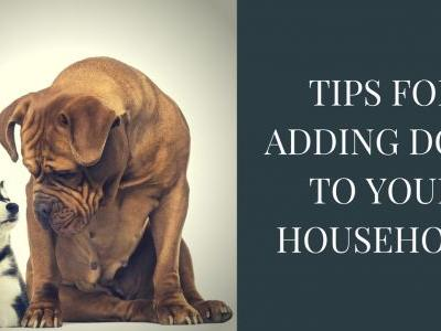 Tips For Adding Dogs To Your Household