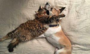 """Rescue Dog With Separation Anxiety Gets Her Very Own """"Therapy Kitten"""""""