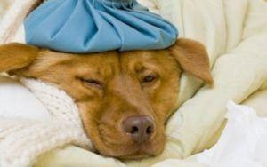 Michigan Is Experiencing A Drastic Rise In Dog Flu Cases