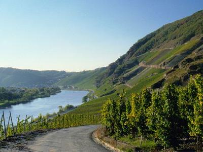 Six Wine Country Bike Trips That Will Make Your Friends Infinitely Jealous