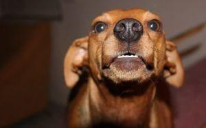 How To Manage Food Aggression In Dogs