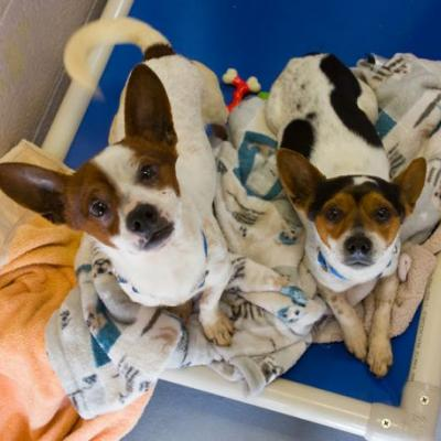 """TIDE"" and ""POD"" BONDED PAIR young chi mix"