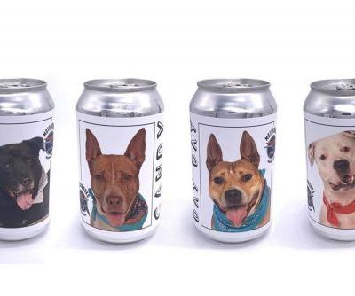 Florida brewery promotes shelter dogs by putting their faces on beer cans
