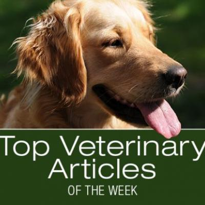 Top Veterinary Articles of the Week: Inducing Vomiting, Placebo Effect, and more