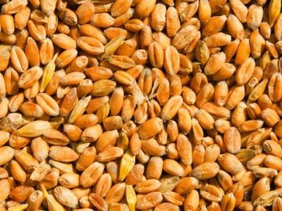 You can prevent cancer by eating more fermented wheat germ extract