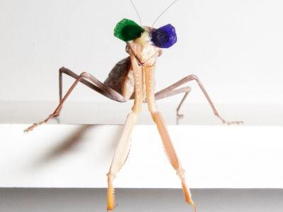 Putting Glasses on Praying Mantis Reveals New Form of 3D Vision