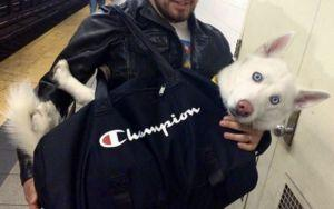 NYC Bans Dogs On Subway Unless They Fit In A Bag. Dog Owners Did Not Disappoint
