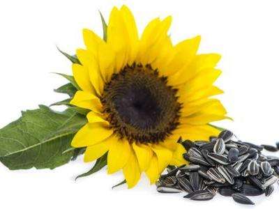 Sunflower Lecithin: Brain-Boosting Supplement or Unhealthy Additive?
