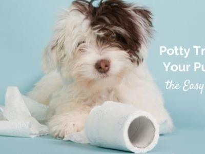 Potty Training Your Puppy the Easy Way