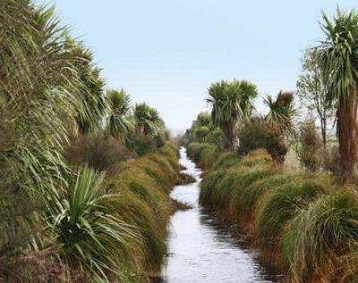 How riparian design can protect New Zealand waterways and improve property value