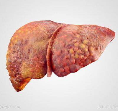 Study concludes that the giant-leaved fig reduces oxidative stress in the liver