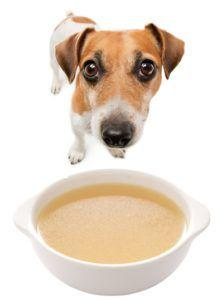 How to Make Homemade Chicken Broth for Your Dog