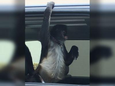 Home Depot employee attacked by customer's pet monkey