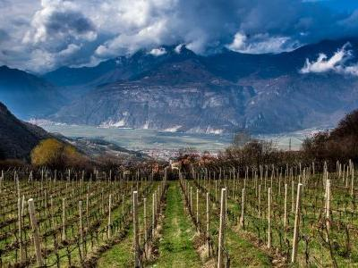 Not All Pinot Grigios Taste the Same. Here's Why