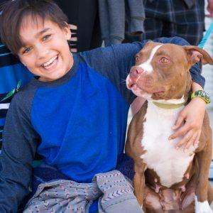 """There's More to """"Pit Bulls"""" Than Meets the Eye"""