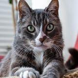 We Asked 2 Vets to Explain Exactly Why Your Cat Stares At You So Much